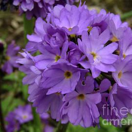 Kim Tran - Lilac Spring 2