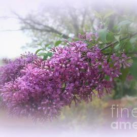 Kay Novy - Lilacs Symbolize Love