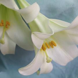 Betty Pehme - Lilies