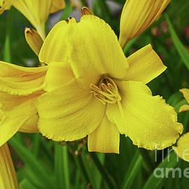 Deborah Bowie - Lilies Everywhere