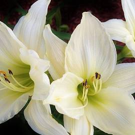 Bruce Bley - Lilies in the Garden