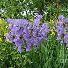 Marsha Heiken - Lilies in the Valley