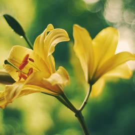 Lilies - Joanna Jankowska