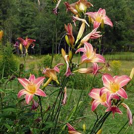 Georgia Sheron - Lillies In The Mountains