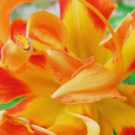 Honey Behrens - Lily Dancer