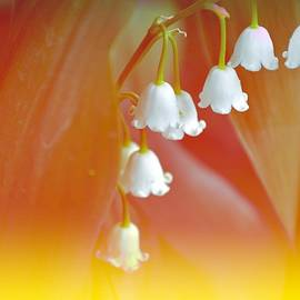 Sonali Gangane - Lily of the valley