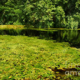 lily pads - HD Connelly