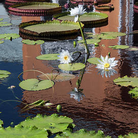 Suzanne Gaff - Lily Pond Reflections