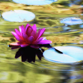 MTBobbins Photography - Lily Ripples - Water Lily