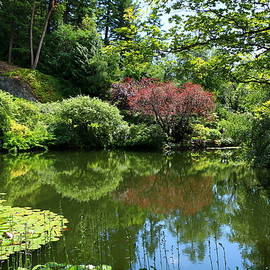 Christiane Schulze Art And Photography - Lilypond At Butchers Gardens