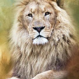 Marco Fischer - Lion King