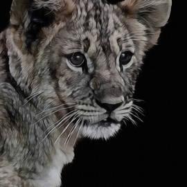 Ernie Echols - Lion Cub Portrait