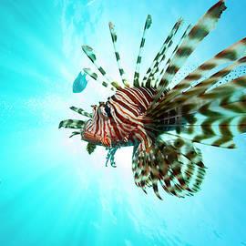 Rico Besserdich - Lion-Fish and Sun