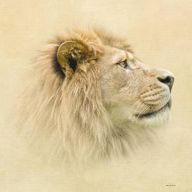 Roy  McPeak - Lion II