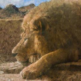 Jack Zulli - Lion King