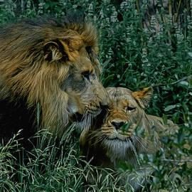 Ernie Echols - Lion Pair