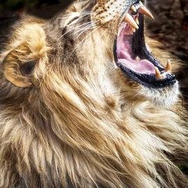 David Millenheft - Lion Roar