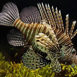 Ericamaxine Price - Lionfish Painting