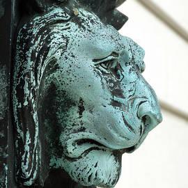 David T Wilkinson - Lion
