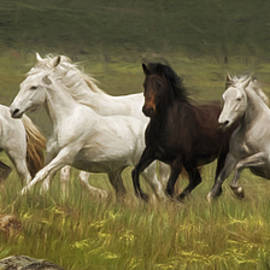 Wes and Dotty Weber - Lipizzan Band on the Run W1889