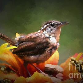 Tina  LeCour - Little Autumn Wren