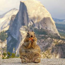 Joseph S Giacalone - Little, Big Squirrel