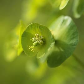 Connie Handscomb - Green Power
