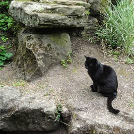 Martin Wall - Little Cat Big Rock