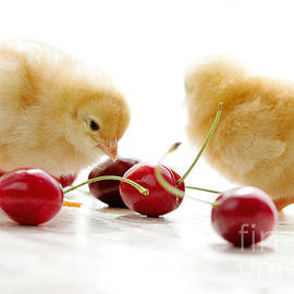 Tanja Riedel - Little Chick and red Cherries