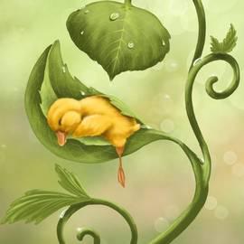 Veronica Minozzi - Little duck
