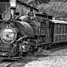 Steve Harrington - Little Engine That Could bw