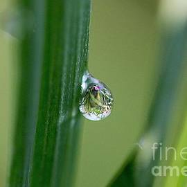 Yumi Johnson - Little garden in the droplet
