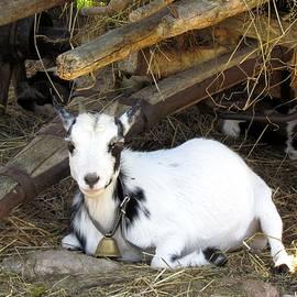 Grao Graman - Little Goat