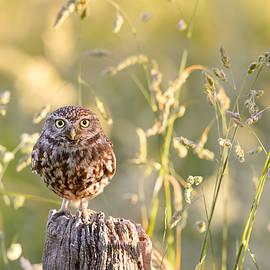Roeselien Raimond - Little Owl Big World
