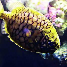 Miroslava Jurcik - Little Pineapple Fish