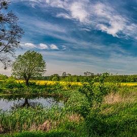 Dmytro Korol - Little pond near a rapeseed field
