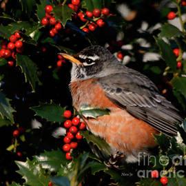 Nava Thompson - Little Robin