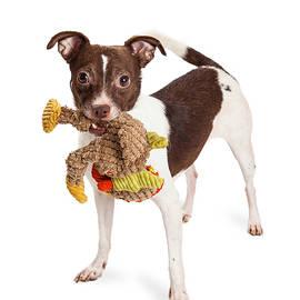 Little Terrier Crossbreed Dog With Plush Toy - Susan Schmitz