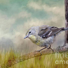 Bonnie Barry - Little Warbler in Louisiana Winter