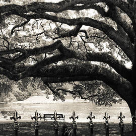 Julia Rigler - Live Oak and Ironwork