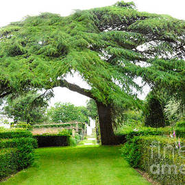 Thomas Carroll - Living Tree