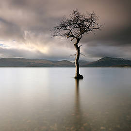 Grant Glendinning - Loch Lomond Lone Tree