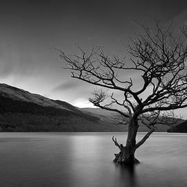 Grant Glendinning - Loch Tree