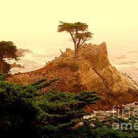 Rick Maxwell - Lone Cypress