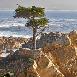 Christine Till - Lone Cypress - The icon of Pebble Beach California