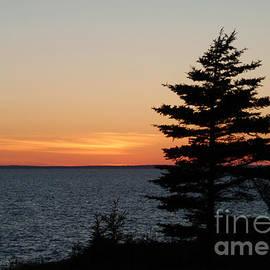 Georgia Sheron - Lone Pine At Sunset