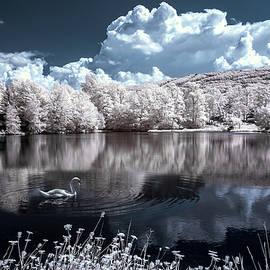 Bayarerdene Ulziisaikhan - Lone swan