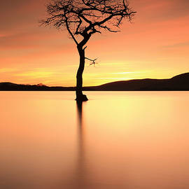 Grant Glendinning - Lone Tree Afterglow