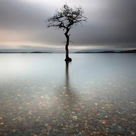 Grant Glendinning - Lone Tree Loch Lomond