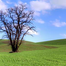 Nikolyn McDonald - Lone Tree - Rolling Hills - Summer Sky